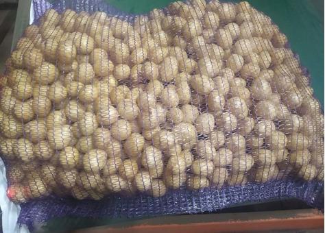 Картофель сорт Рэд, Гала сетки по 25кг