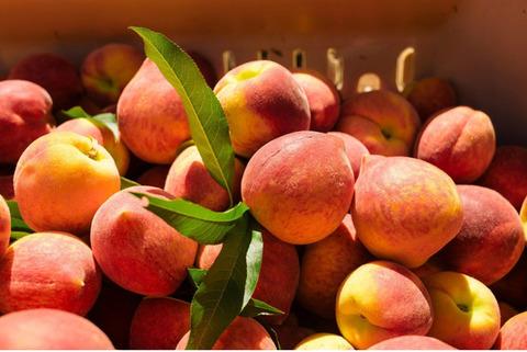 Продаю персик отличного качества