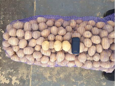 Картофель белый в сетке Гала (25кг) (Россия) калибр 40-50мм