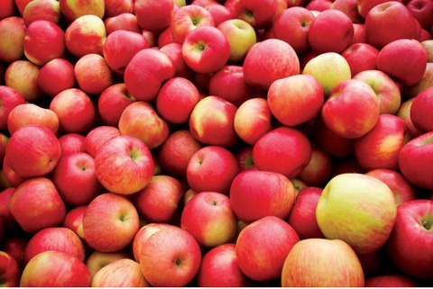 Македонские яблоки напрямую от производителя