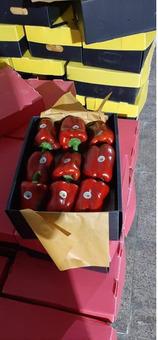 Перец красный/зеленый/желтый сладкий (болгарский) (10кг) сорт Калифорния (Иран)