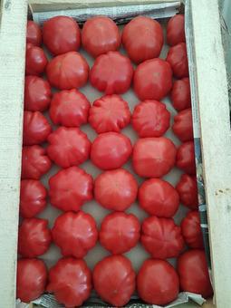 Томаты розовые (Бакинские) (7кг) (Россия)
