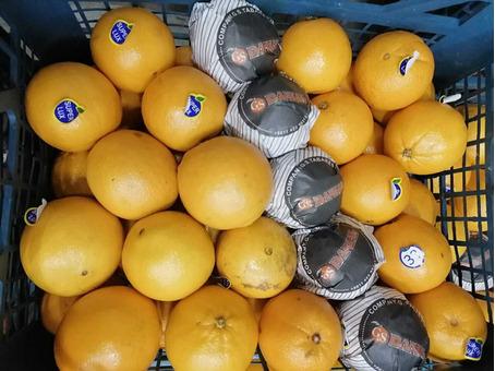 Апельсин (Иран) (сорт Португалия) 6-7см