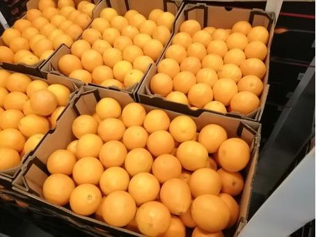 Апельсин для сока (ЮАР) (сорт Валенсия) 5-5,5см 19кг/шт