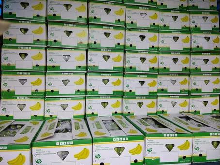 Бананы зеленые (Эквадор) (сорт Кавендиш) 19,5кг/шт