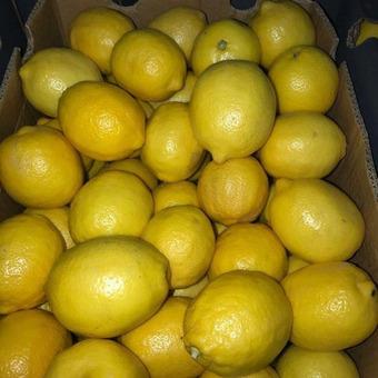 Лимон второй сорт (Турция) 6см, 10кг/шт
