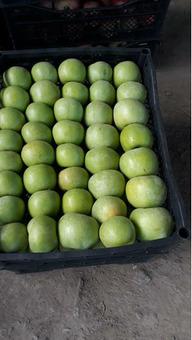 Яблоки Гренни Смит (Сербия) калибр 6-7см, 20кг/шт