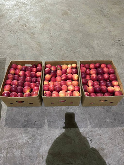 Яблоки (Белоруссия) (сорт Беркутовское) 6-7см,17кг/шт