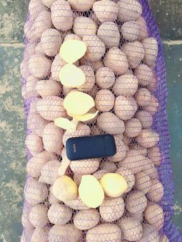 Картофель белый в сетке (Россия) (сорт Гала) калибр 50/60мм, 25кг/шт