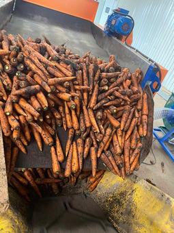 Морковь не мытая (Россия) (сорт Кордоба F1) гост 32284-2013, 20/35, 10-25см, 25кг/шт