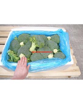 Брокколи (Россия) (диам. 10-17см) 450гр 10кг/шт