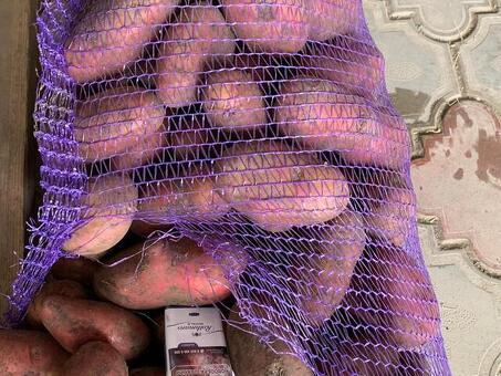 Картофель красный в сетке (Россия) (сорт Рэд) калибр 60/70мм 25кг/шт