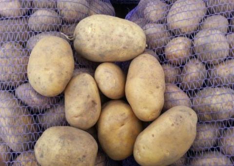 Картофель сорт Бриз,калибр 5-7+ (крупная)